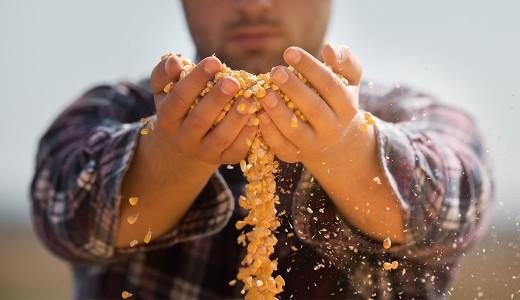 研究から分かる穀物の効果