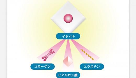 真皮成分を生み出す線維芽細胞の役割とは